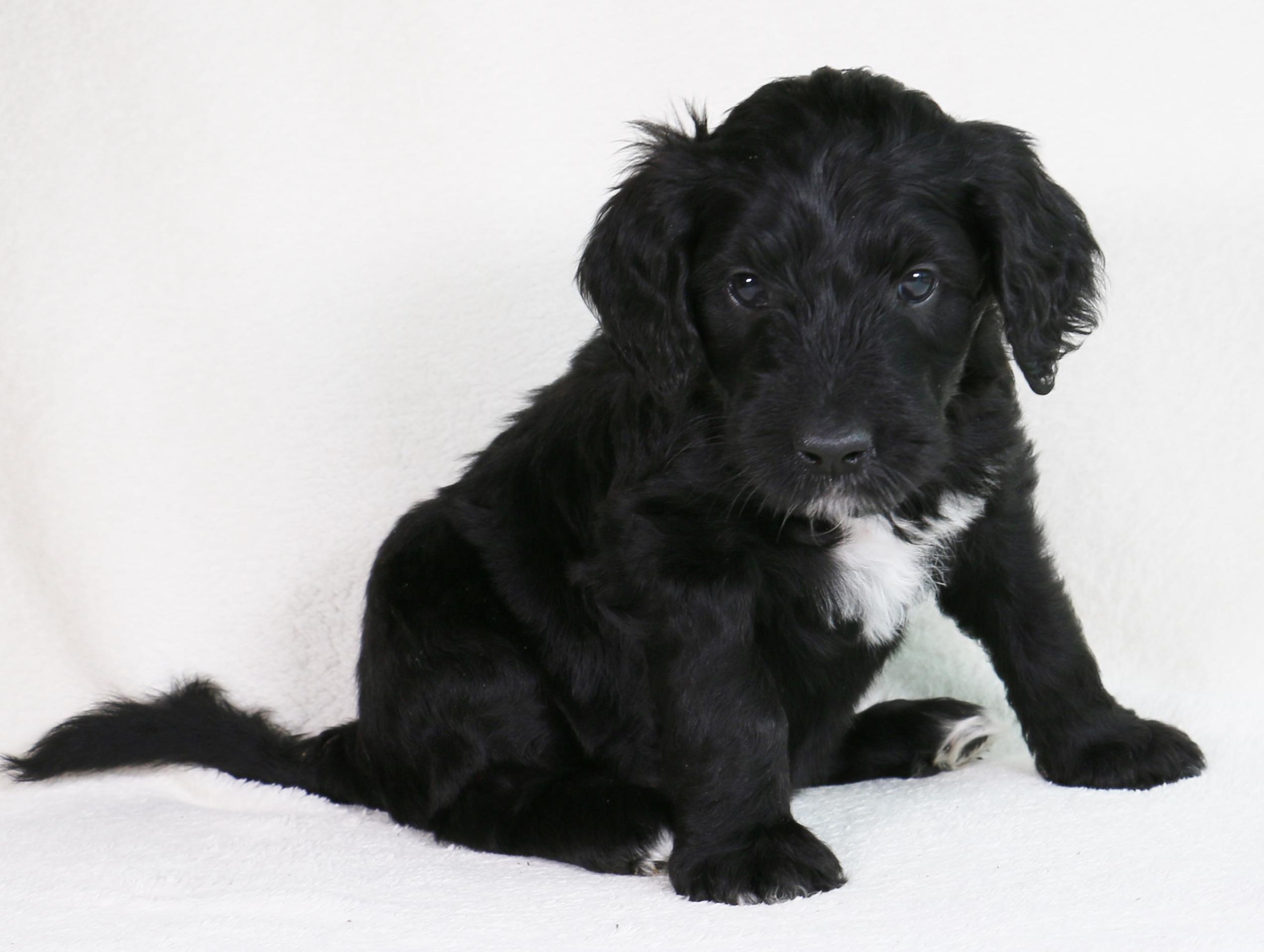 Dakota at 6 Weeks