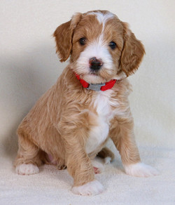 Cooper is 6 Weeks Old