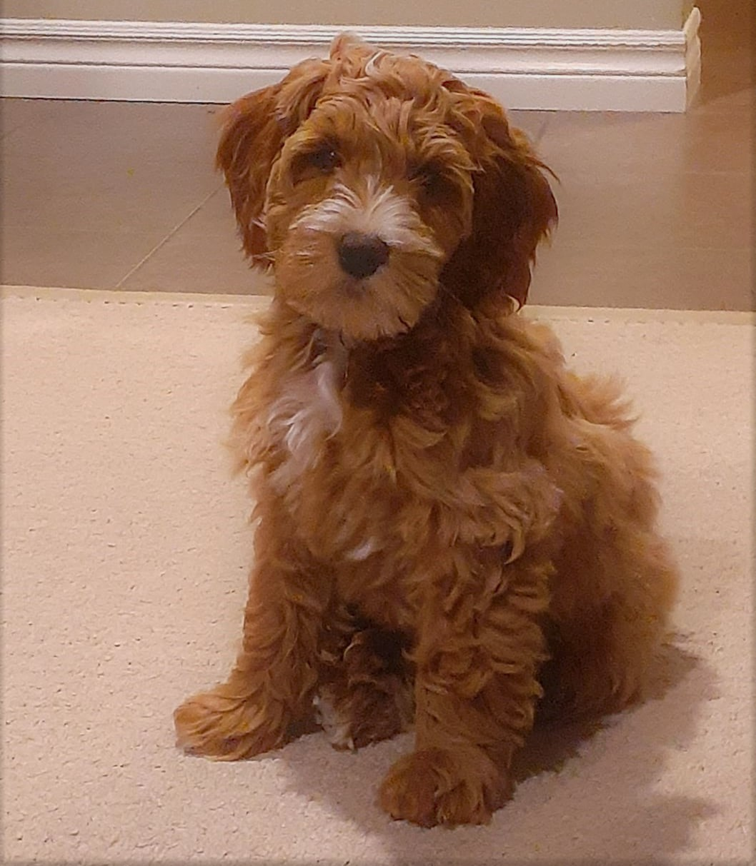 Teddy at 3 months