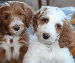 Oakley and Nelson