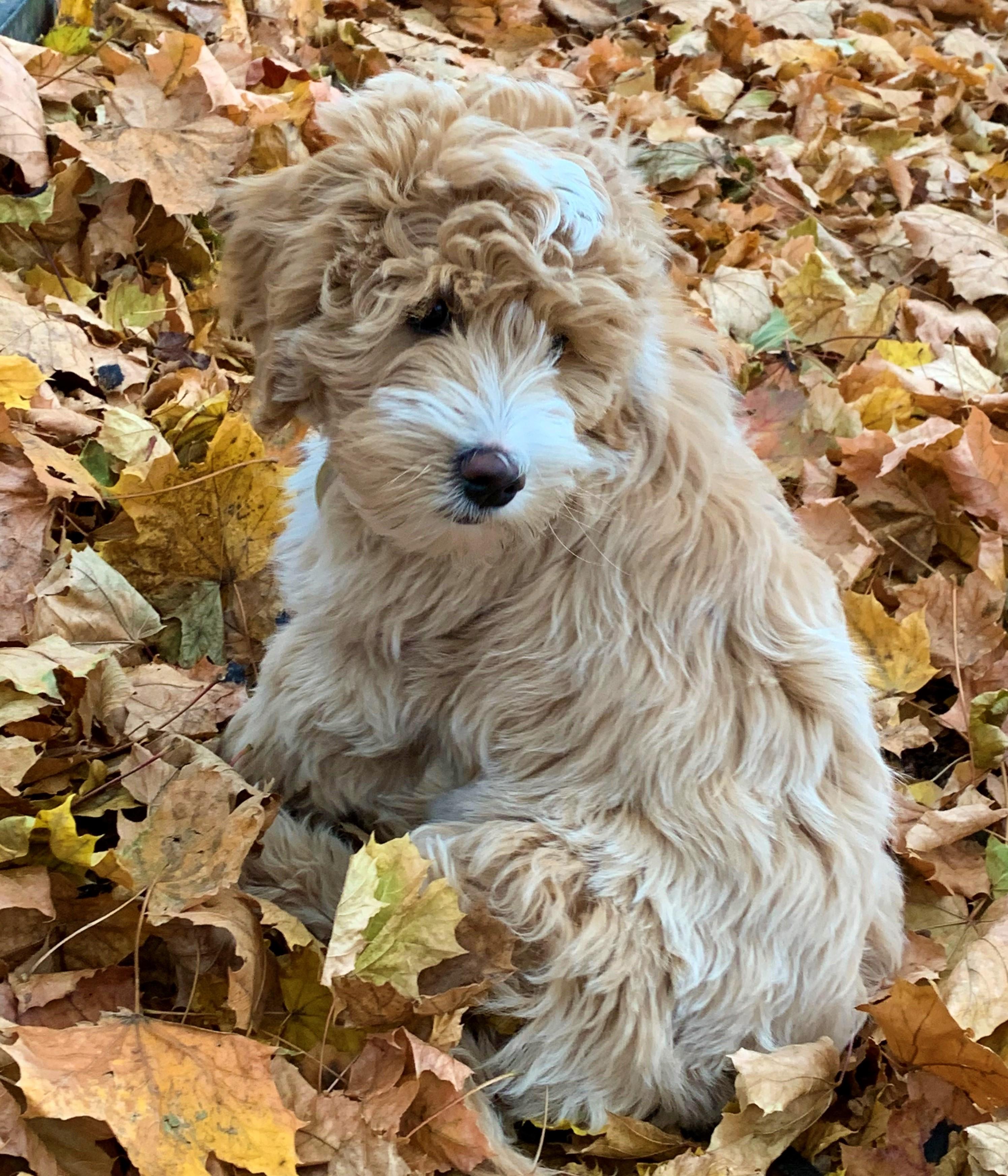 Mabel at 3 Months