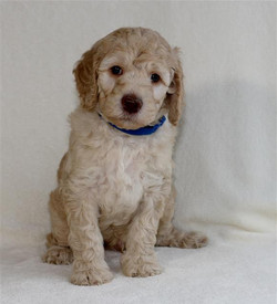 Jackson at 6 weeks