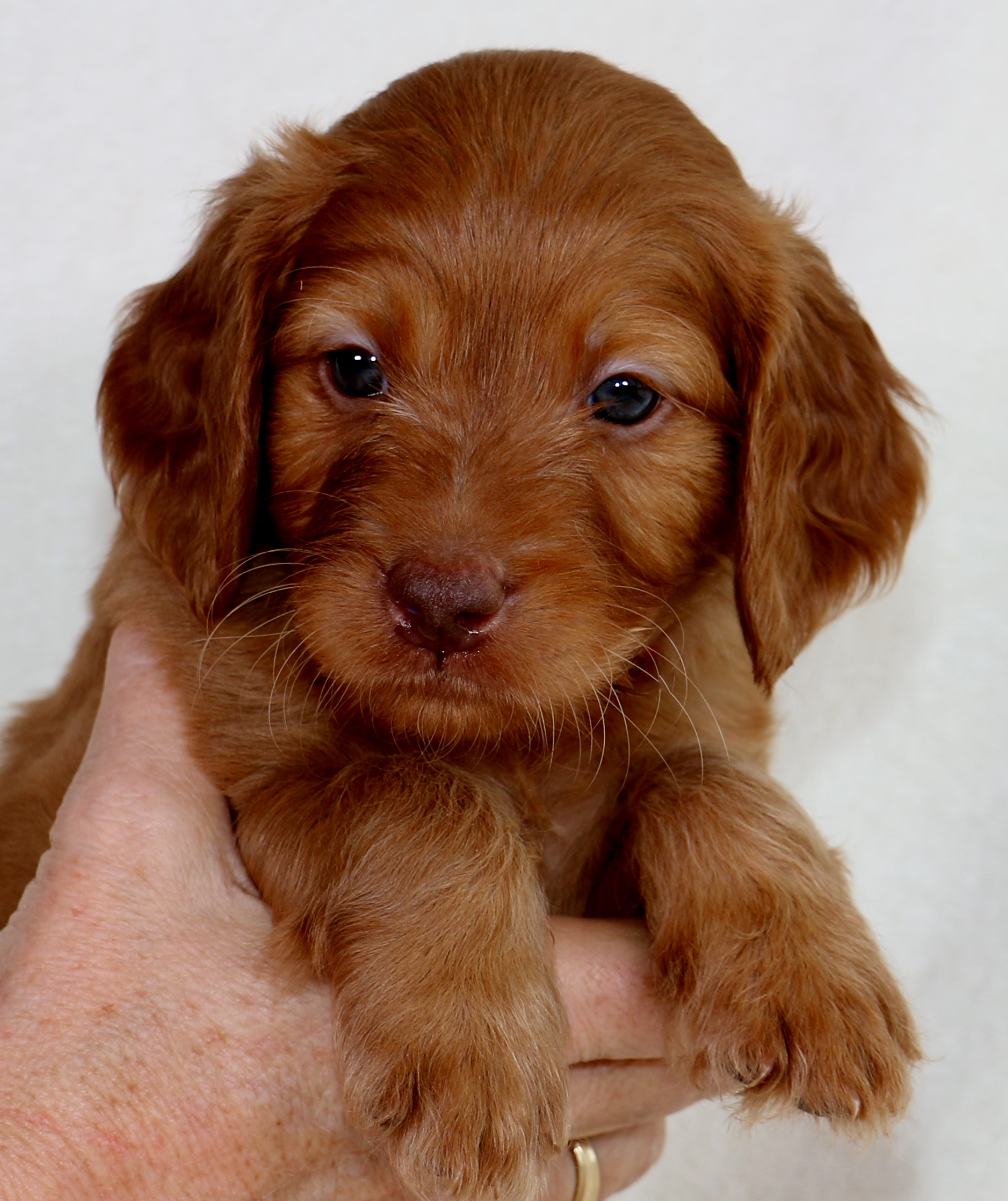 Rusty at 6 Weeks