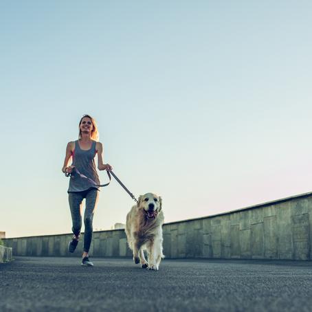 Best Dog Breeds for Running