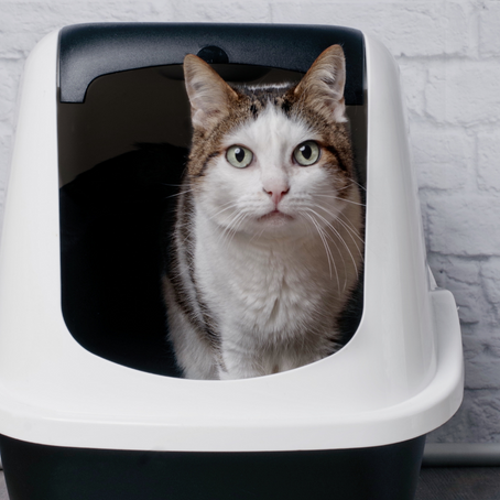 All About Kitty Litter Pans: When to Change Pans or Litter, How Many You Need, and More