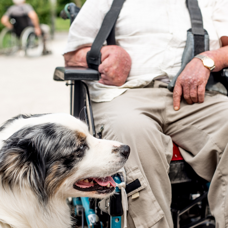Paws with Cause: The Importance of Emotional Support Animals for Veterans