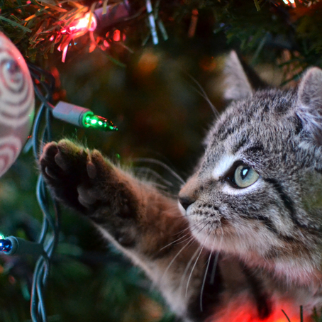 Keeping Your Cat Out of Your Christmas Tree