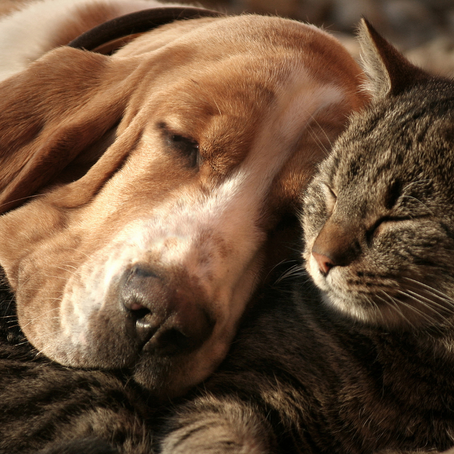 A Look at How Long Your Pet Should Sleep Each Day