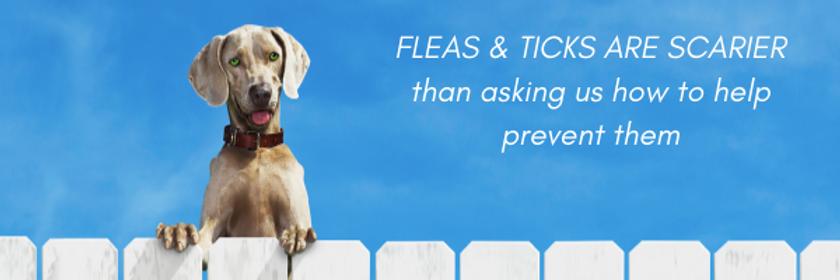 Flea & Tick Medication