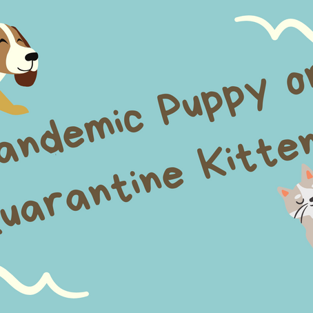 Pandemic Puppy or Quarantine Kitten?: Combating Separation Anxiety