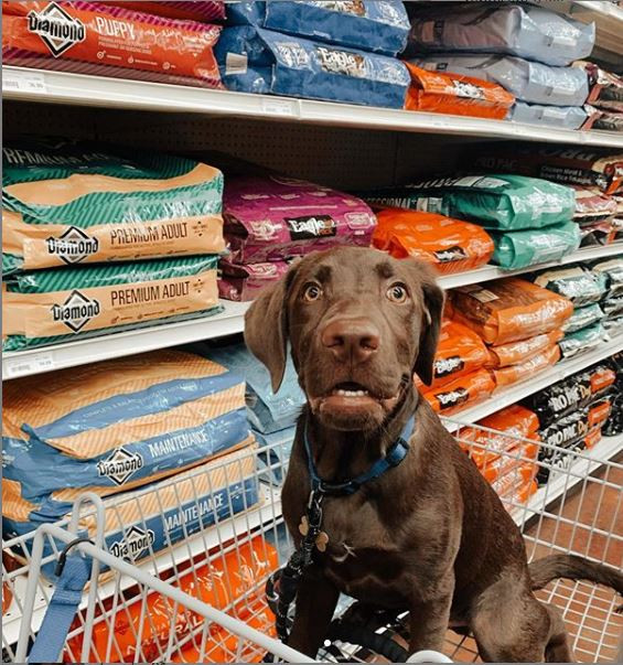 Dog sitting in shopping cart in dog toy aisle