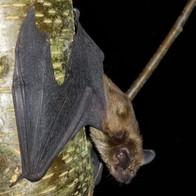 Bats of Kentucky