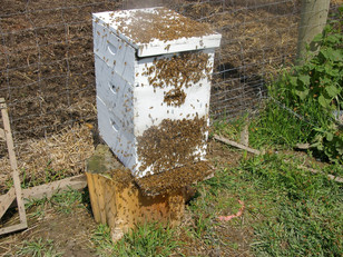 Splitting Beehives
