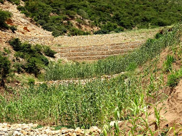 Irrigation Farming.png