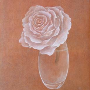 白い花 white rose