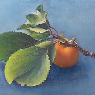 杏子 apricot