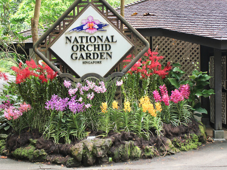 TRAVEL SINGAPORE : NATIONAL ORCHID GARDEN