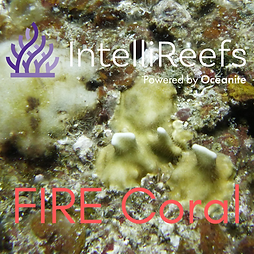 FIRE Coral aaa.png