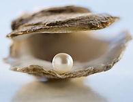 oyster_edited.jpg