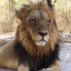 Fatala Park Lion.jpeg
