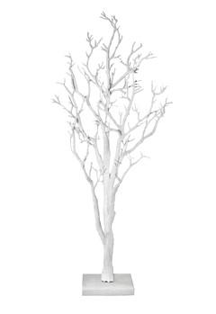 White Manzanita Tree