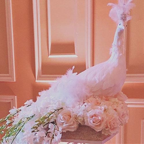 White Peacock Rental
