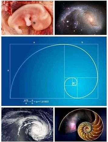 Proporciones_espiral_logarítmica.jpg