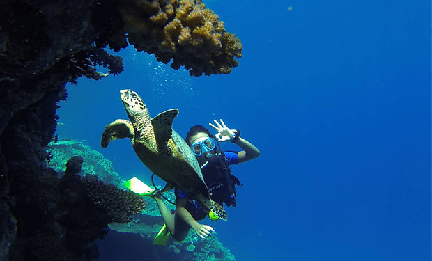 turtle diving neptune dahab.jpg