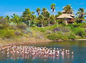 necker_flamingos3.jpg