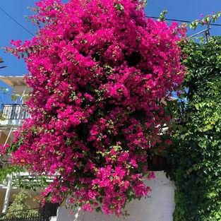 Copy of Photo Credits_ Ιωάννα Πετρουλάκη