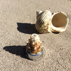Natur Muschel Wirbler 2