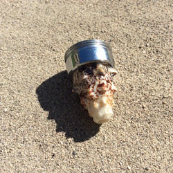 Natur Muschel Wirbler