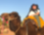 Morocco from a Wheelchair & Camel.png