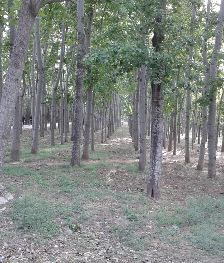Forest Near Our Home 2