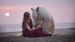 Der Traum eines jeden Tierfotografen - Renesse