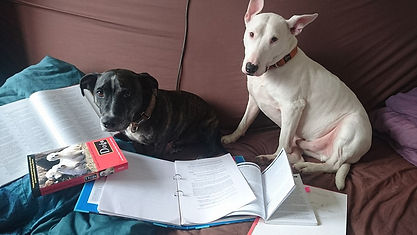 Studying dogs books learning