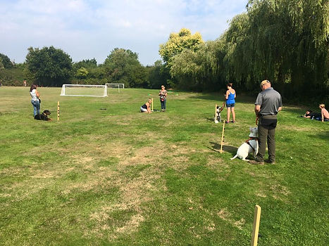 puppy dog training class greenford