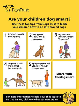 27155-dogs-trust-smart-infographic_1200x