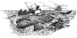 Whitby Whalers