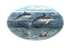 Seals and Bottle Nose Dolphins LR Vig