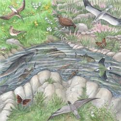 Dales Wildlife
