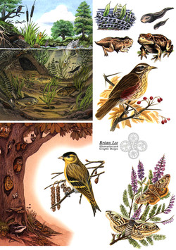 New Nature Spec Sheet