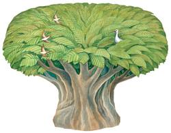 Osiris tree
