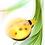 Thumbnail: Phantom Ladybug