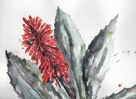 Aloe (sold)