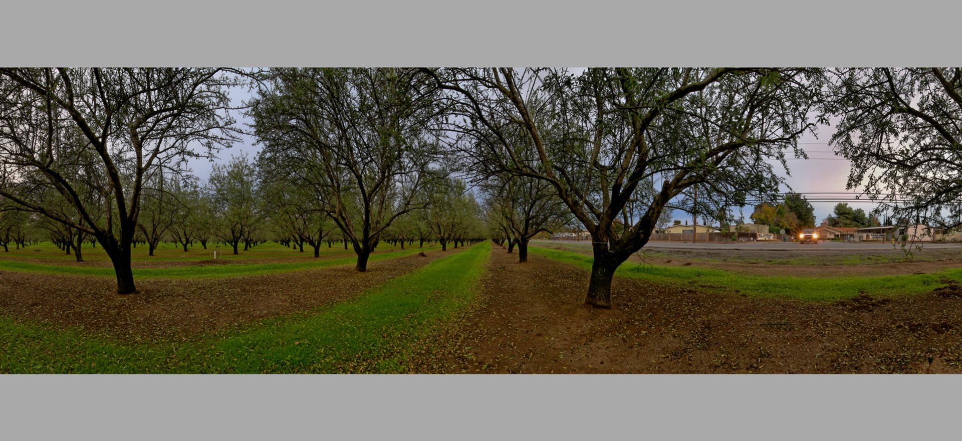 Almond Grove, Chico, Ca