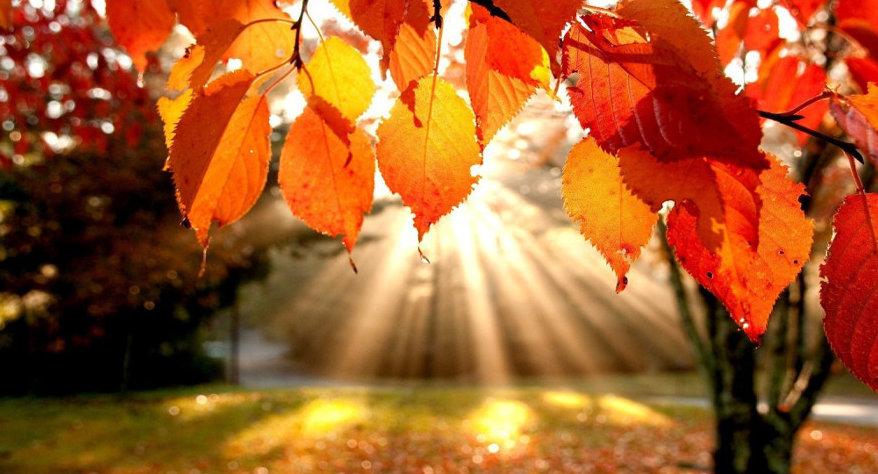 Autumn  Filtered Sun