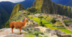 Machu Pichu llama