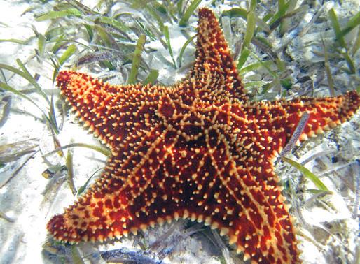 Sea Stars and Sea Cucumbers