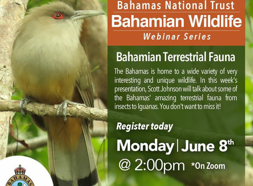 Bahamas National Trust Continues their weekly Webinar series